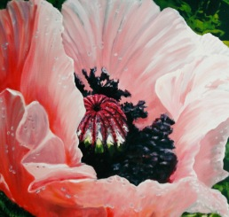 """#317, Summer's Beauty, 36""""x36"""", oil on gallery canvas, $775.00"""