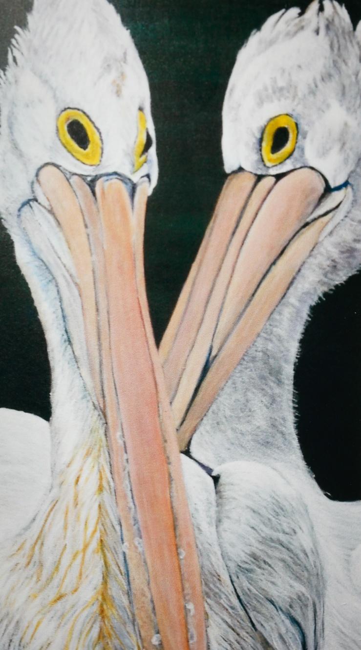 #318, Pelican