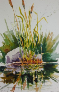 "#381, Cattails reflection, 6""x9"", w/c, $95.00"
