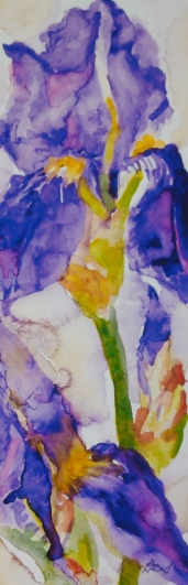 "#383, Iris wonder, 3.5""x10"", w/c, $80.00"