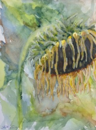 #432-Sunflower, Watercolour and gouache, $165.00