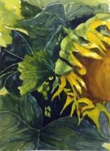 Sunflower III, watercolour, plein air painting